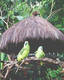 green-bird