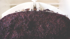 grapeseeds